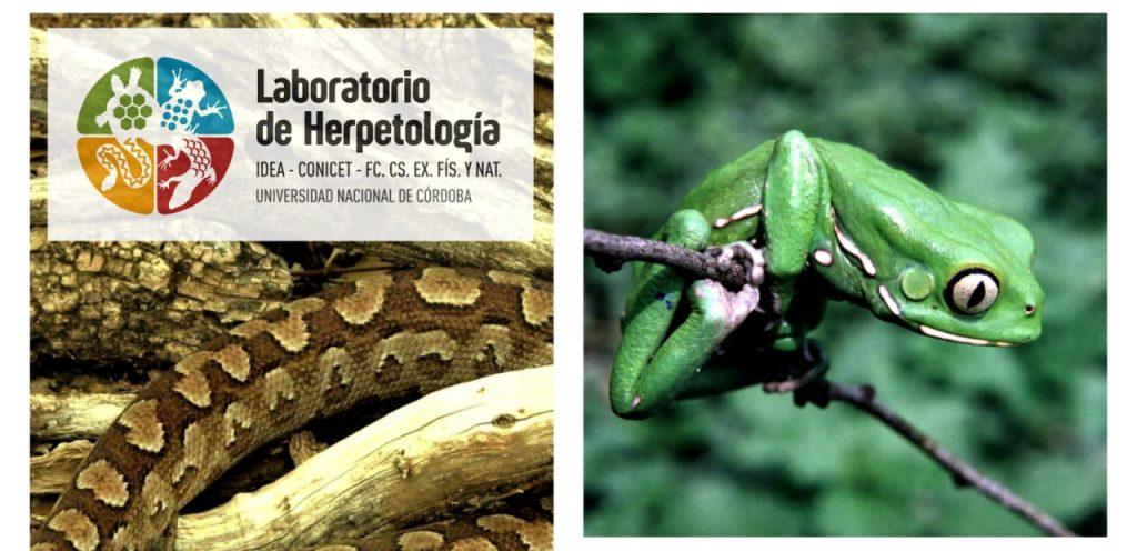 Evaluación global de la respuesta de los anfibios y reptiles a los cambios en el uso del suelo