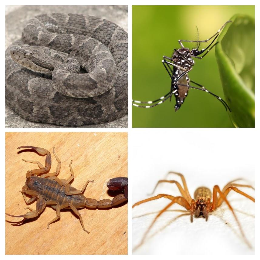 Mosquitos, alacranes, víboras y arañas… picaduras de verano